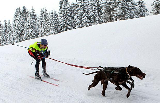 skijoring1