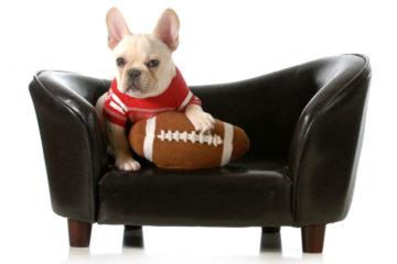 El perro, el deporte y su mejor estado de salud.